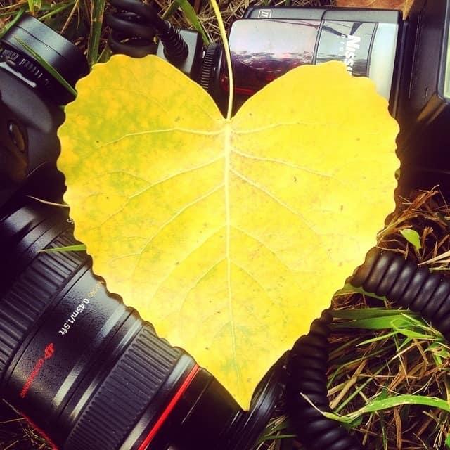 love-heart-yellow-photography